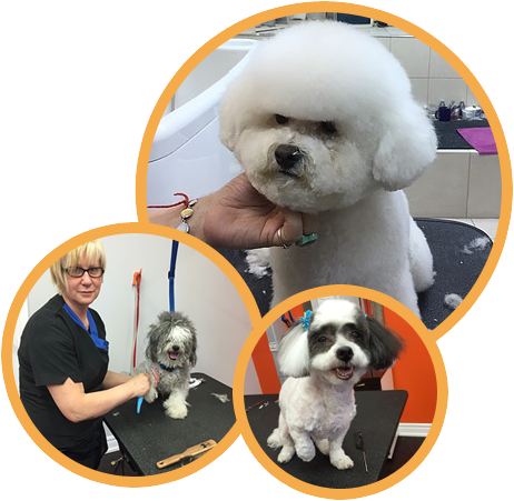 Dog Grooming, Cat, Pet Boarding, Daycare| Puppy Cuts & Care